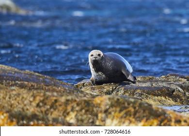 Alone seal
