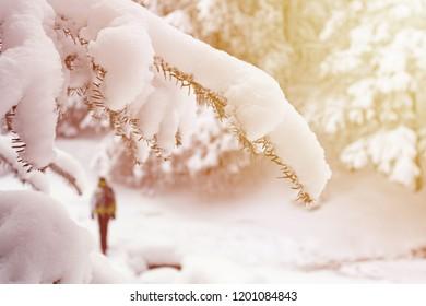Alone tourist walking through snowy forest