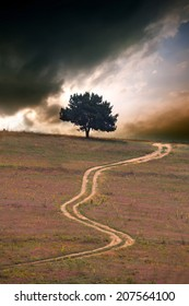 alone tree against dramatic HDR sunset and dirt road, vertical nature landscape