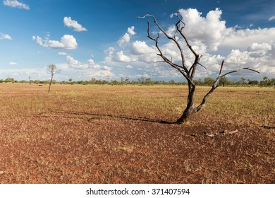 Alone Tree at Barkly Highway, Northern Territory, Australia