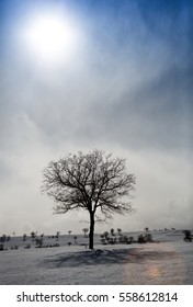 Alone tree in a field, winter season.