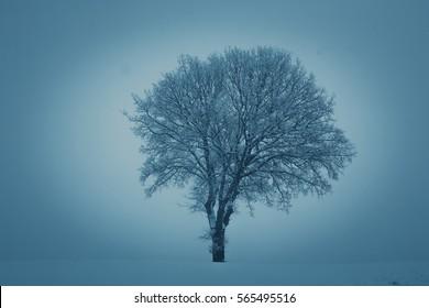 Alone tree in a field, winter season.