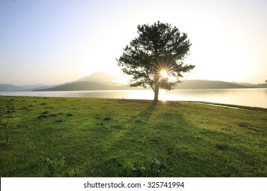 Alone tree in grass field