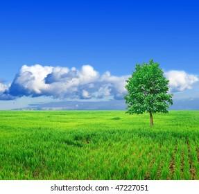 alone tree in a green field