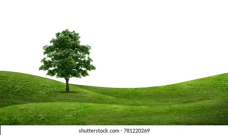 Alone tree in green grass hill area isolated on white background. Green natural tree and mountain for background. Outdoor abstract background.