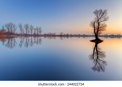 Alone tree in lake with color sky