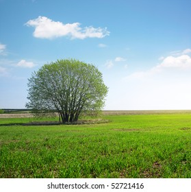 Alone tree in meadow with green grass and blue sky with clouds
