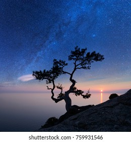 Alone tree on the edge of the cliff against the backdrop of the Black Sea at night time. Fantastic starry sky with milky way, Crimea