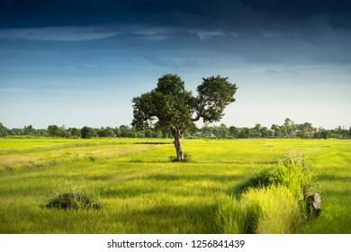 alone tree on grass field