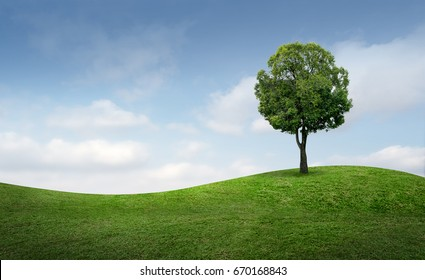 Alone tree on green hill of grass field and blue sky background with clipping path.