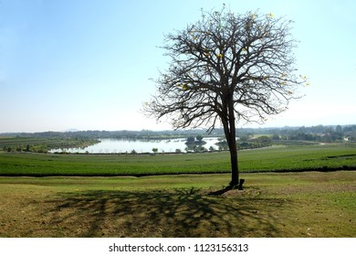 Alone tree  on meadow in bright sunny day have a shadow of tree on floor.  picturesque tree on green field. Landscape of summer field with lake and the sky wide.