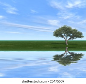 Alone tree on a river coast