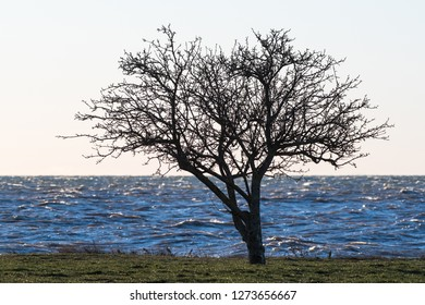 Alone tree silhouette by a coast with stormy water
