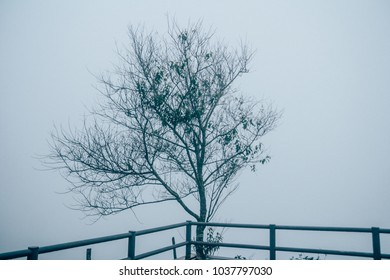 Alone Tree silhouette in foggy morning, vintage style.Mysterious foggy winter scene with leafless tree in fog