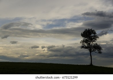 alone tree with sky