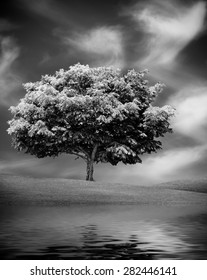 Alone tree with water reflection, White and black picture. Nature outdoor scene