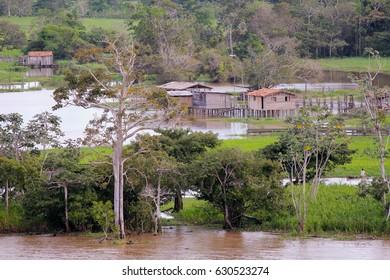 Along the Amazon River, Brazil