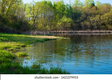 along banks of pond at edge of forest during spring season in salem hills park inver grove heights minnesota