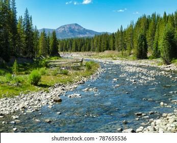 Along the river bank - Yellowstone National Park