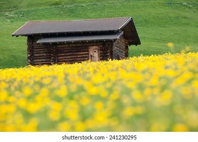 Alp meadow in spring