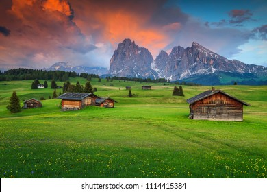 Alpe di Siusi - Seiser Alm with Sassolungo - Langkofel mountain group in background at sunset. Colorful spring flowers and wooden chalets in Dolomites, Trentino Alto Adige, South Tyrol, Italy, Europe