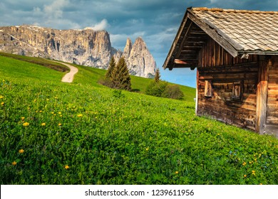 Alpe di Siusi - Seiser Alm with Sciliar - Schlern mountain group in background. Yellow spring flowers and wooden lodge in Dolomites, Trentino Alto Adige, South Tyrol, Italy, Europe
