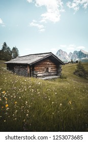 Alpe di Siusi - Seiser Alm with with Sassolungo - Langkofel mountain group in background. Yellow spring flowers and wooden lodge in Dolomites, Trentino Alto Adige, South Tyrol, Italy, Europe