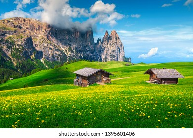 Alpe di Siusi - Seiser Alm and Sciliar - Schlern mountains in background. Picturesque landscape, green fields with yellow dandelion flowers and mountains, Dolomites, Trentino Alto Adige, Italy, Europe
