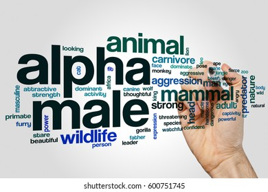 Alpha male word cloud concept on grey background.