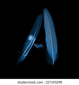 alphabet - letter A from bird feathers, x-ray effect