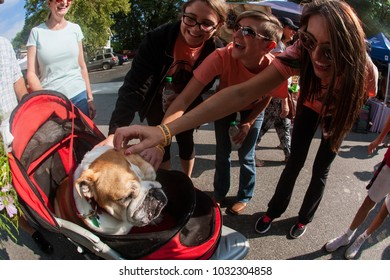Alpharetta, GA/USA - September 30, 2017:  Young women pet a cute English bulldog sitting in a baby stroller at the Scarecrow Harvest fall festival on September 30, 2017 in Alpharetta, GA.