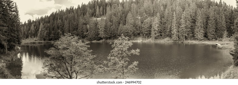 Alpin panoramic landscape. Lake with trees in summer season.