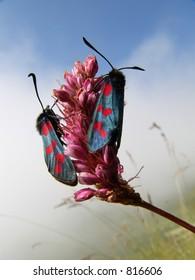 Alpine butterflies