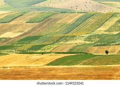 Alpine farm field. Kyrgyzstan