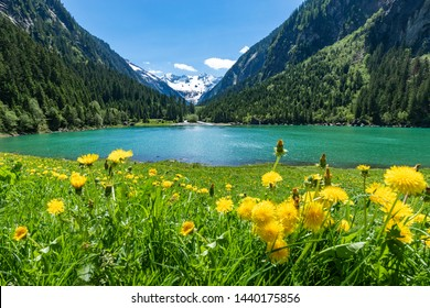 Alpine flowers meadow with mountain lake and mountains range in the background. Austria, Tyrol Region