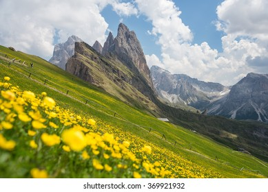 Alpine flowers with Seceda peak in background, Odle mountain range, Gardena Valley, Dolomites, South Tyrol, Italy