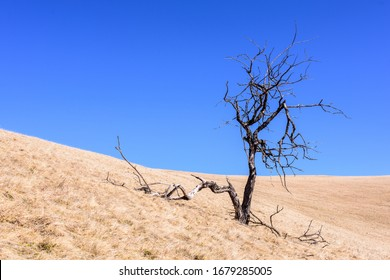 Alpine grass landscape with dry tree. Dead tree on a hillside the European Carpathians