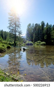 Alpine Lake and pine