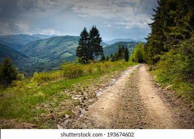 Alpine landscape with a dirt road and pine forest
