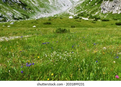 Alpine landscape with a meadow with white and blue flowers in Julian alps and Triglav national park, Slovenia  - Shutterstock ID 2031899231
