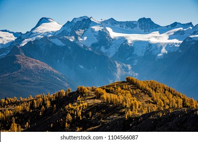 Alpine larches in the majestic Monica Meadows located in the West Kootenay of British Columbia.