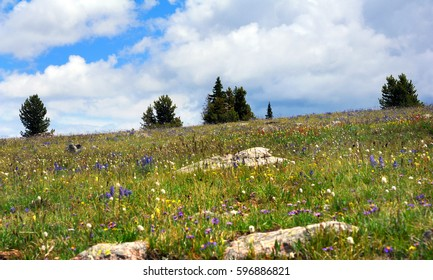 Alpine meadow beckons exploring on the Beartooth Pass Scenic Byway.  Meadow is filled with flowers.