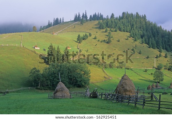 alpine meadow, Bukowina, Romania
