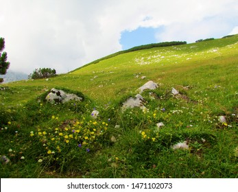 Alpine meadow covering a sunlit slope bellow the top of Kompotela mountain in Kamnik savinja alps and alpine blooming alpine rock rose (Helianthemum alpestre)