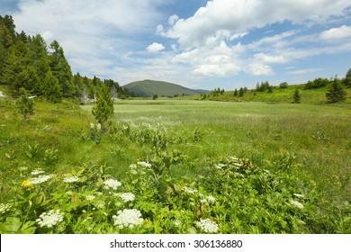 Alpine meadow at Lake Windebensee, Carinthia, Austria
