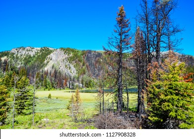 Alpine meadow with remnants of forest fire. Forest fire one year ago. Burnt individual trees in the alpine valley in Banff, Alberta. Catastrophic forest fire hit Rockies year ago.