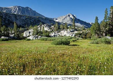 alpine meadow in the Sierra Nevada in California mountains with wildflowers