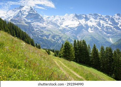 Alpine meadow with wild flowers and a walking track above Blumental in the Swiss Alps near Interlaken, showing the Jungfrau in the distance over the Lauterbrunnen valley.