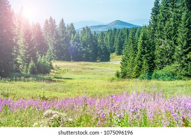 Alpine Meadows Filled with Wild Flowers