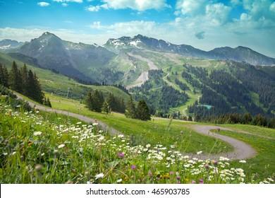 Alpine meadows in summer, Avoriaz, France